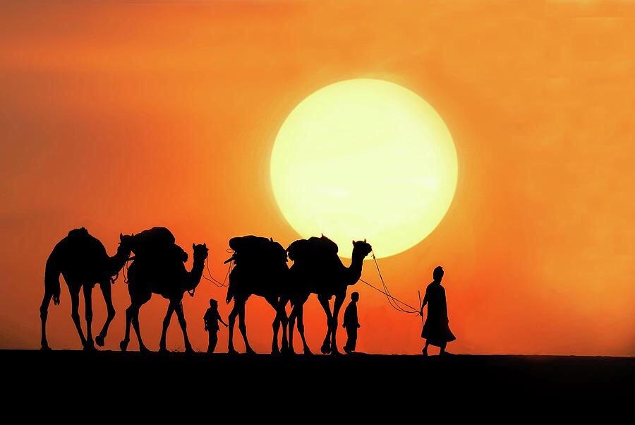 camel safari dunes camp - logo
