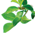 Enversys Greentek Solutions - logo